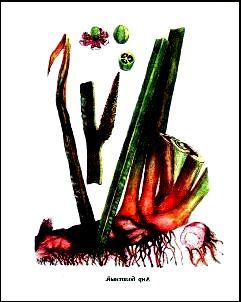 Съедобные растения