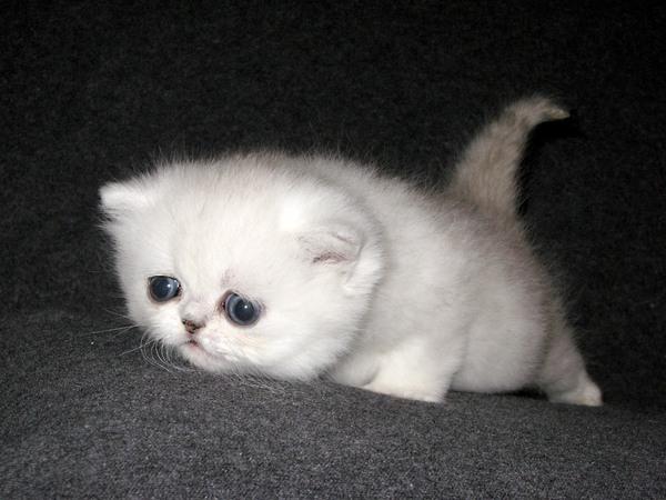 Картинки самых красивых кошек